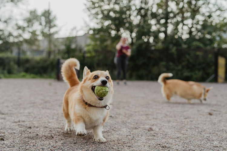 Dog walk, lifestyle One Animal Domestic Animals Domestic Canine Dog Animal Themes Mammal Pets Animal Vertebrate Tree Day Plant Nature Focus On Foreground Land Real People One Person Looking Away Outdoors Mouth Open Pet Owner Animal Tongue
