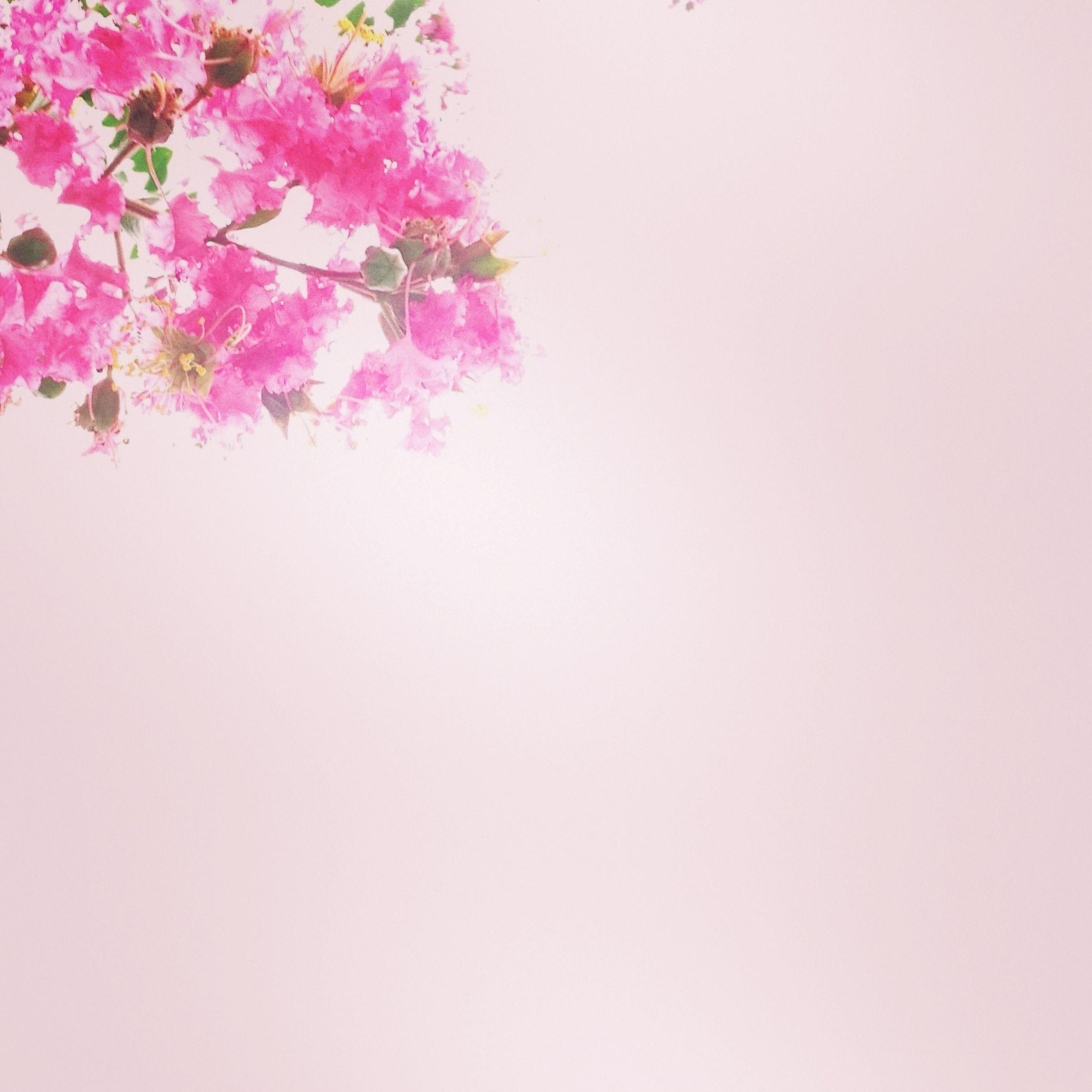 夏の名残 Flowers Minimalism Negative Space Minimalobsession