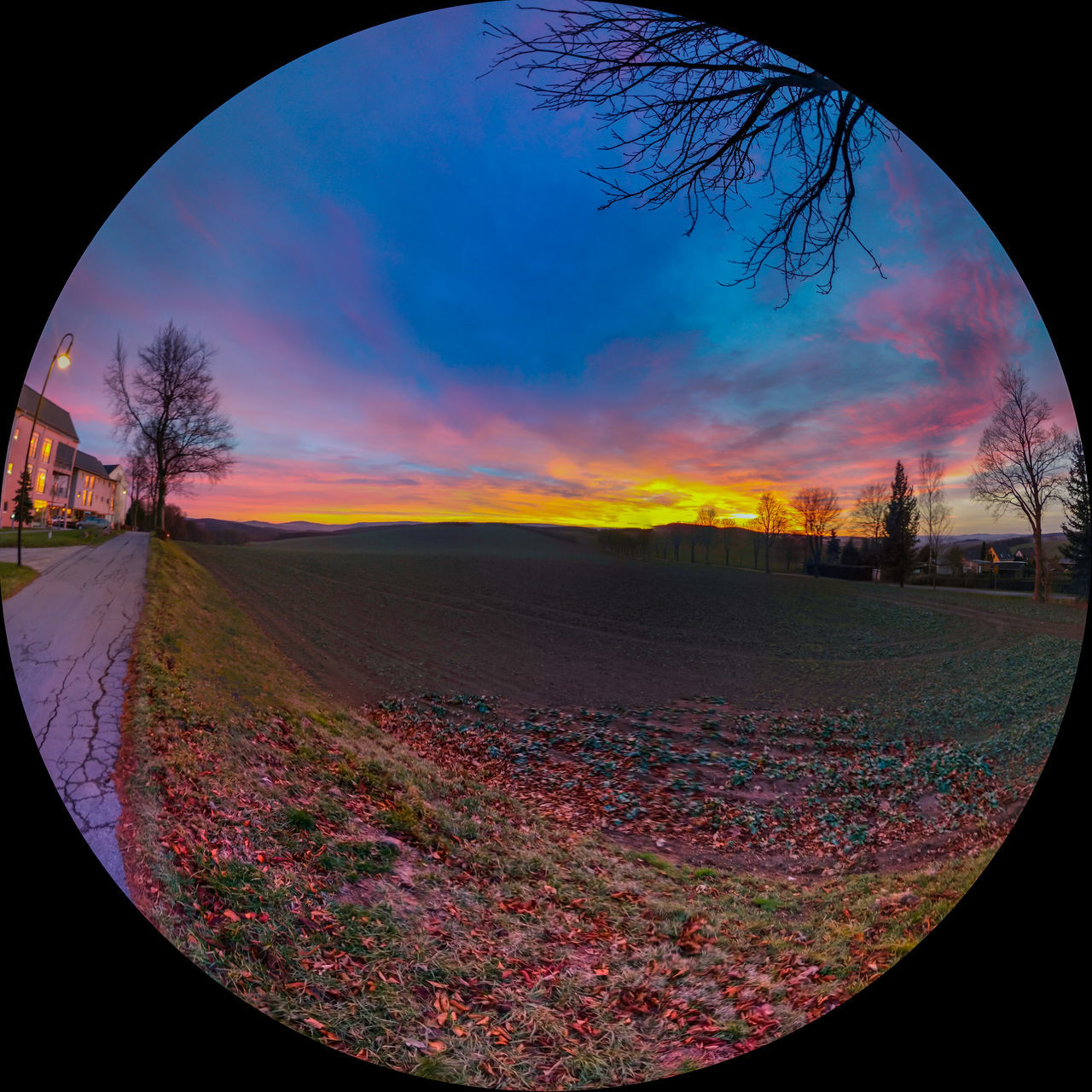 tree, circle, bare tree, sky, tranquility, landscape, no people, tranquil scene, nature, sunset, beauty in nature, scenics, fish-eye lens, autumn, outdoors, day, close-up