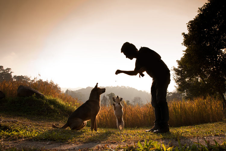 Person Training Dogs On Field