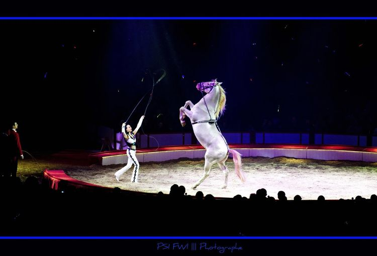 Cheval Blanc Cirque