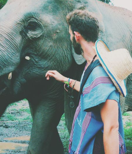 Rear view of man touching elephant