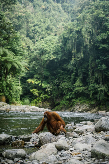 Monkey on rock in forest