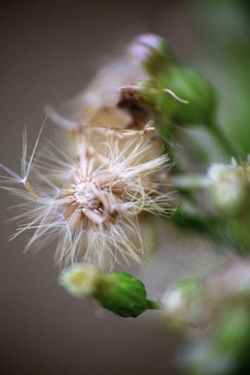 Plant Close-up