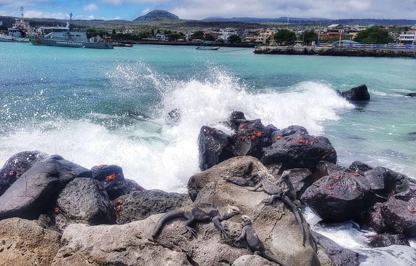 Water Sea Day Nature Wave Beach Outdoors Beauty In Nature No People Sky Crab Marine Iguanas Animal Themes Swimming Environmental Conservation Environment Beauty In Nature Travel Destinations Nature Fragility