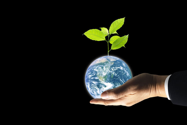 Earth Day Black Background Body Part Business Care Copy Space Environment Finger Growth Hand Holding Human Body Part Human Hand Human Limb Indoors  Leaf Men Nature One Person Plant Plant Part Studio Shot