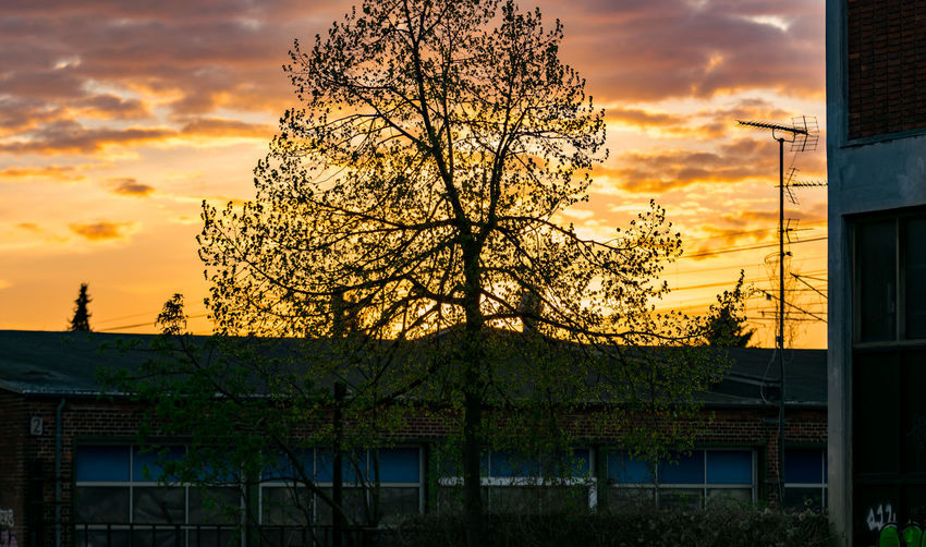 Tree in focus :) 100mm Architecture Beauty In Nature Building Exterior Built Structure Cloud - Sky Day F2.8 Growth Nature Nikon No People Orange Color Outdoors Scenics Sigma Sky Sunset Tranquil Scene Tranquility Tree