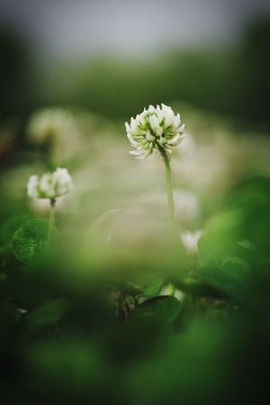 不懂是什么花 只是觉得好看