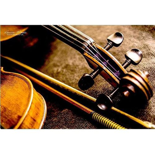 Violinos em foco 3 Demerson Mendes Fotografia Music Musica Som Orquestra Arte FotoShow Fotografia Nikon Santarém Top Ensaiofotografico Brasil Braziligram OFS
