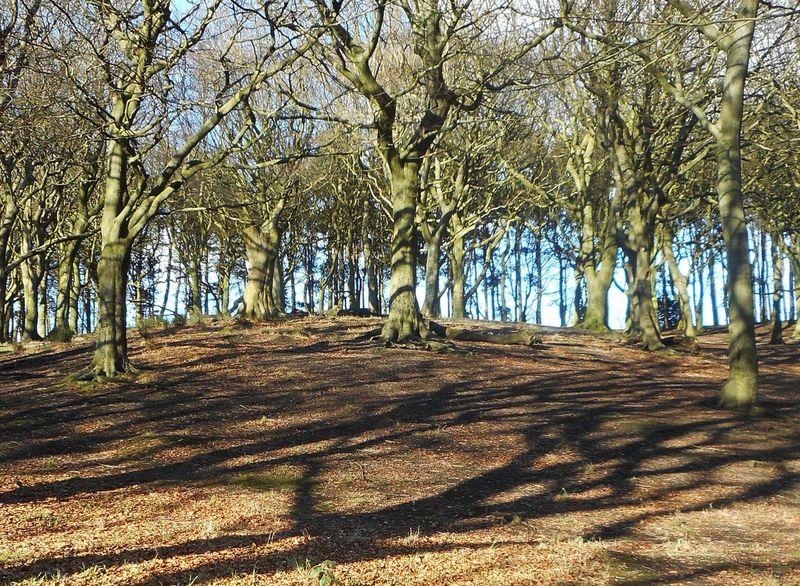 Day Idyllic Landscape Nature No People Scenics Shadows Sunlight Sunny Tandlehill Park Tranquil Scene Tranquility Trees Treescape
