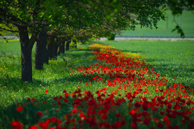 Scenic view of flowering trees on field