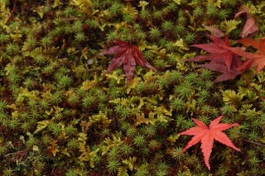 落ち葉。 公園 秋 紅葉 お疲れ様 Autumn🍁🍁🍁