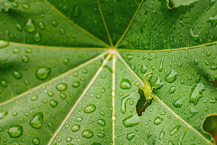 Green Drop Leaf