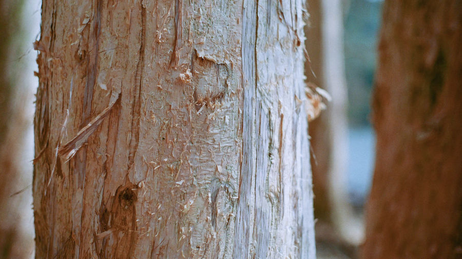Focus On Foreground Close-up Tree No People Tree Trunk Trunk Day Textured  Wood - Material Outdoors Nature Brown Tranquility Selective Focus Beauty In Nature Plant Pattern Rough Plant Bark Tranquil Scene