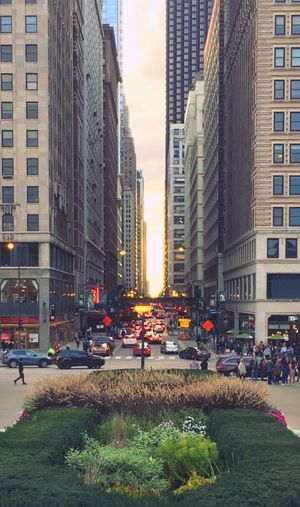 Millennium Park View 🌳 at the Magnificent Mile Intersection in the Chicago Loop 💙 Architecture Chicago Architecture Architecture_collection Busy Busy Street City Street Streetphotography Urban Skyline Eyeemphotography EyeEm EyeEm Gallery Eyeemphoto Urban Exploration Iphonephotography