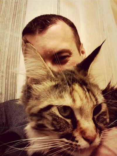 Cats Catstagram Maykon Pets