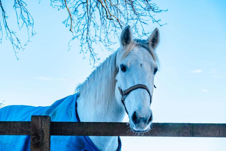 Portrait Of Horse Against Blue Sky