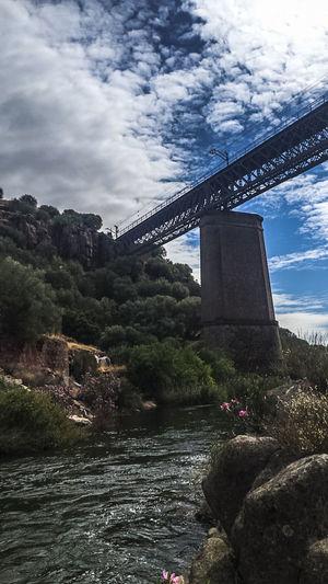 Linares Caminos
