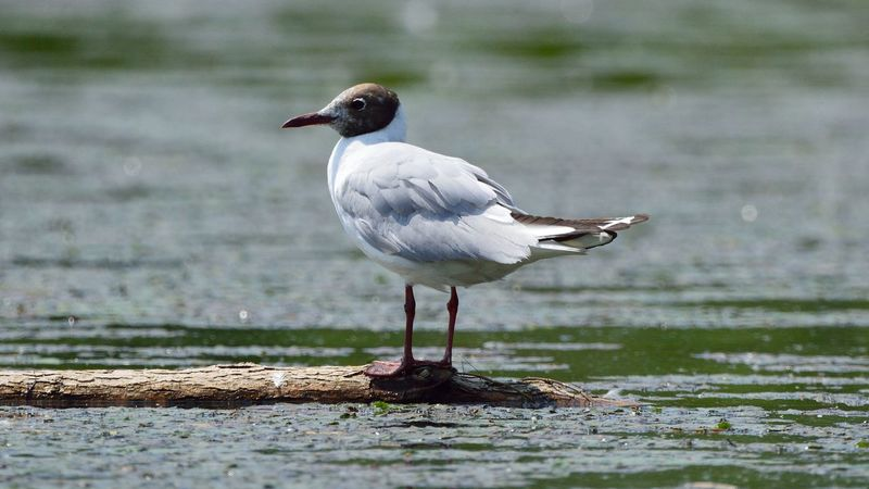 Animal Animals In The Wild Bird Selective Focus Wildlife Zoology