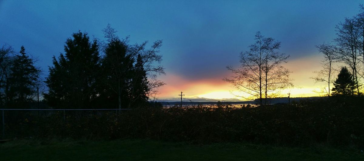 From My Point Of View From Where I Stand Mybackyard View From My House Tulalip Bay Tulalip Indian Reservation Rez NativeLife Pacific Northwest  Olympic Mountains Colorful Sunset Silhouettes Tree And Sky Silhouettes Cloudporn Sky Clouds December Sky December 2015 God's Canvas Natures Textures Beautiful Colors Gods Creation