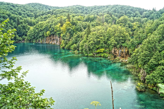 Beauty In Nature Day Forest Green Green Color Growth HDR Idyllic Lake Landscape With Whitewall Lush Foliage Mountain Nature Non-urban Scene Plitvice Plitvice National Park Reflection River Scenics Tranquil Scene Tranquility Tree Water Landscapes With WhiteWall EyeEm Best Shots