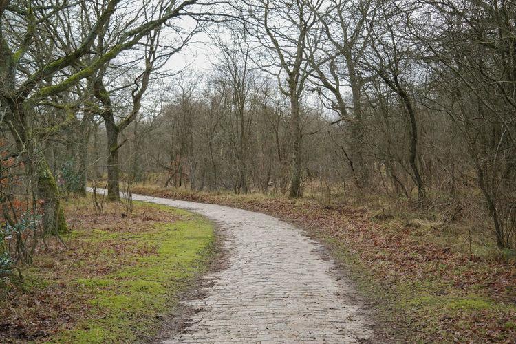 Path trough the Woods Cobblestone Streets Grass Path Tree Cobblestone Meijendel Park Wood - Material Wood Paths