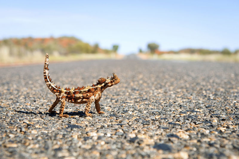 Close-up of lizard on road against sky