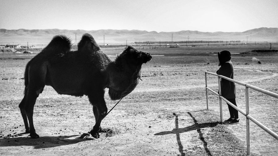 Side view of woman standing by bactrian camel on field