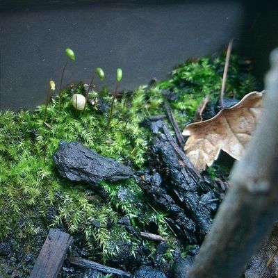 Mini forest, not really. Vscocam