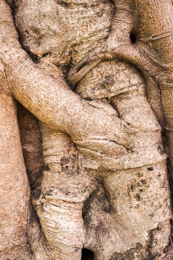 Banyan Tree Bark Ficus Benjamina Natural Nature Rugged Textured  Tree Wood Abstract Banyan Close-up Closeup Dry Rough Texture Trunk