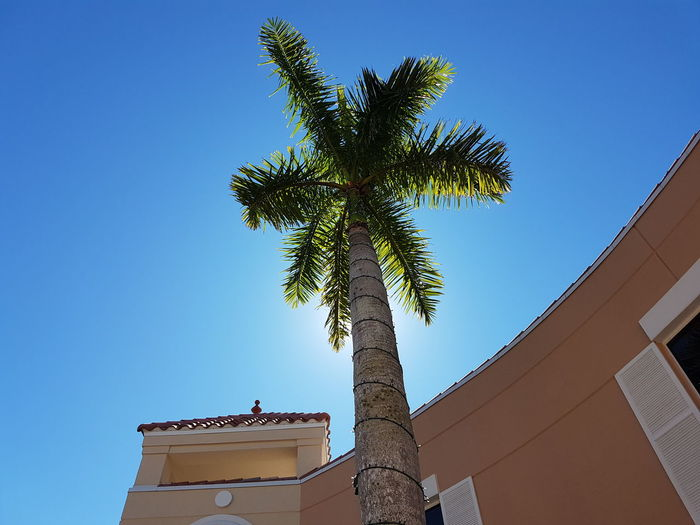 Low angle view of coconut palm tree against building