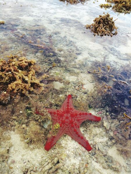 Red starfish Hanging Out IPhoneography Inthebeach