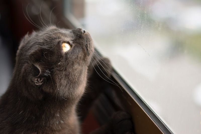 Close-Up Of Cat By Window