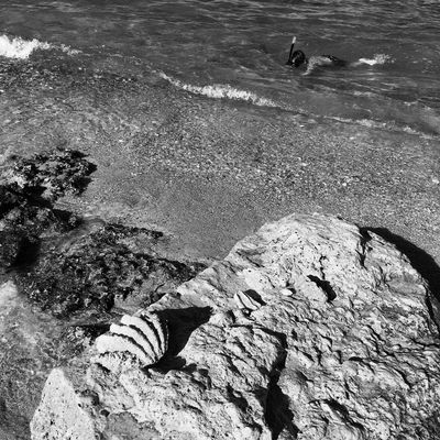 Snorkeling Schnorcheln Ocean Red Sea Flamenco Resort El Quesir Egypt Urlaub Relaxing Light And Shadow Warm FreeTime Sunny Holiday Beautiful Shells Beachtresures Beach Comfortable Bnw Blackandwhite Boy Children