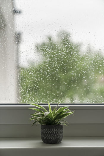 Raindrops on window sill