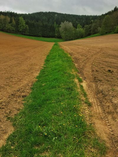 Green path through a plowed field Field Agriculture Landscape Nature Tranquility Beauty In Nature Tranquil Scene Rural Scene Farm Scenics Grass No People Day Growth Outdoors Plough Green Color Tree Plowed Field