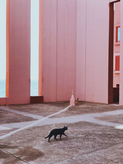 Get lost with Bofill in red walls MagicRealism Sea And Sky Minimal Pink EyeEm Selects EyeEm Gallery EyeEmNewHere Domestic Animals The Graphic City Built Structure Architecture Outdoors Day No People The Architect - 2018 EyeEm Awards