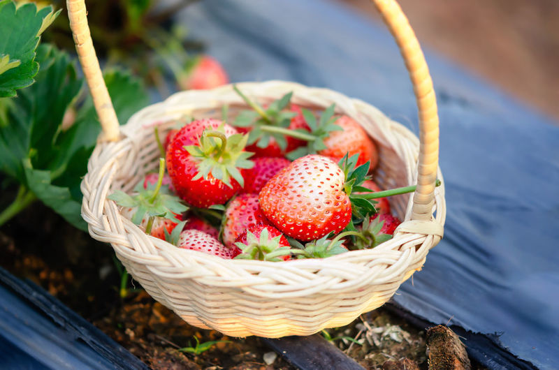 Strawberry Berry Fruit Food And Drink Fruit Basket Food Freshness Healthy Eating Container Wellbeing Close-up Red Day Focus On Foreground High Angle View No People Nature Plant Still Life Wicker Ripe