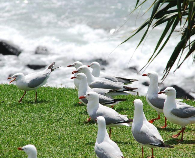 Seagulls On Grassy Field Against Sea