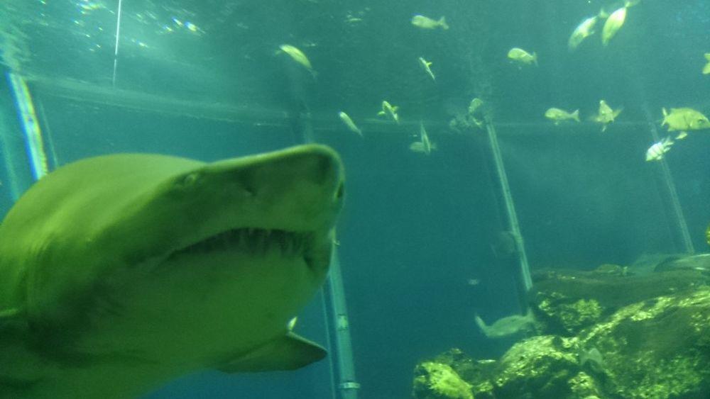 wow!shark.