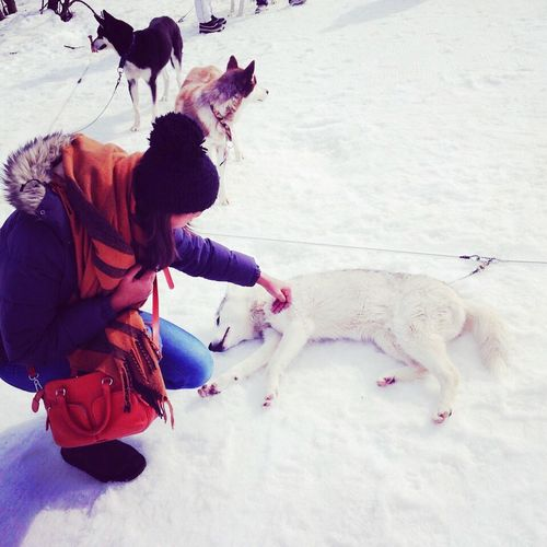 Doggylove Sweetzerland Snow Huskyrace Lovelovelove