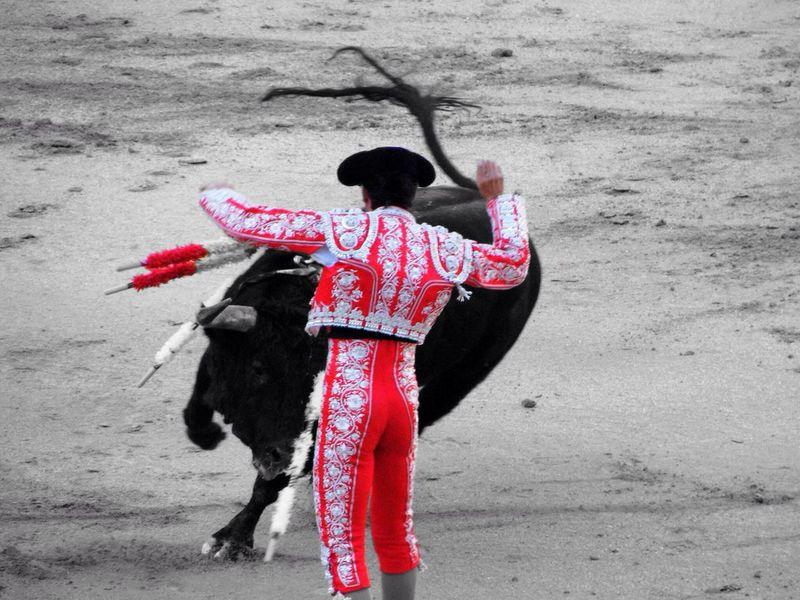 Bull Fighter show