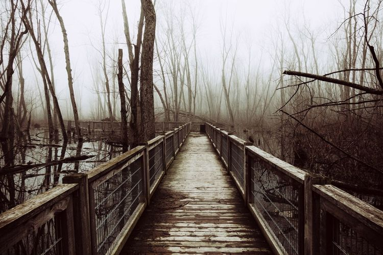 EyeEm Best Shots EyeEm Nature Lover Ambiance Water Swamp Mysterious Follow The Path Path In Nature Forest Foggy Morning Dead Tree Solitude Tree Bare Tree Fog Footbridge Bridge - Man Made Structure Sky Foggy Tranquil Scene Tranquility Calm