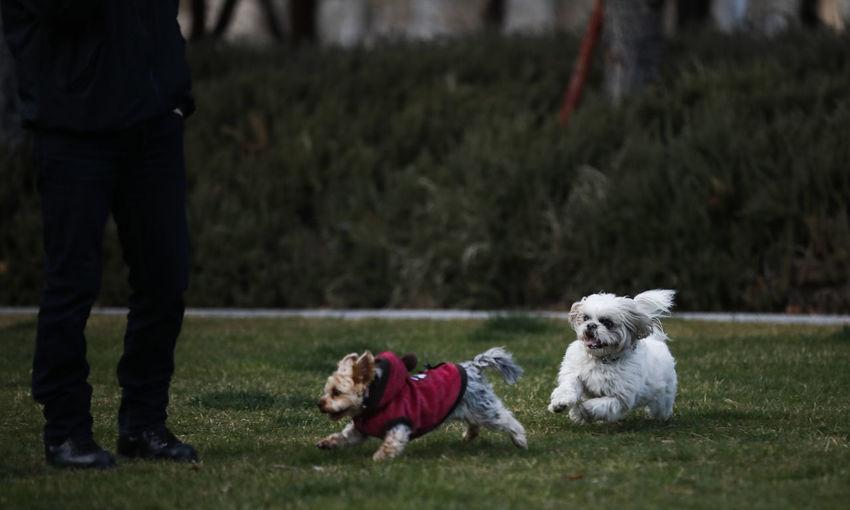 Canine Dog Pets Domestic Mammal Domestic Animals One Animal Leash Vertebrate Lap Dog Small Plant Grass Pet Leash People Pet Owner Day Shih Tzu