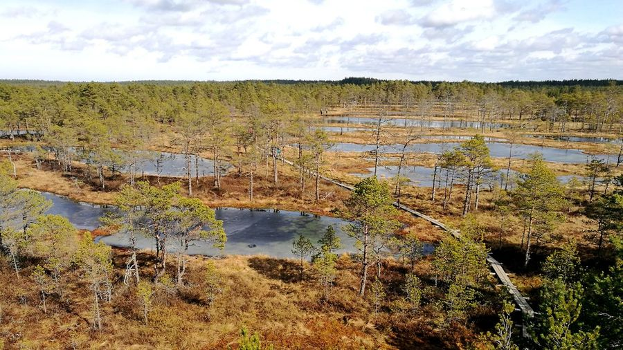 Sunny Weather Estonian Nature Great View Viru Bog Swamp Water And Moss Landscape No People Outdoors