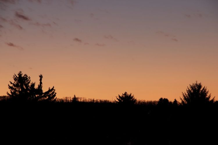 Silhouette trees on landscape against sky during sunset