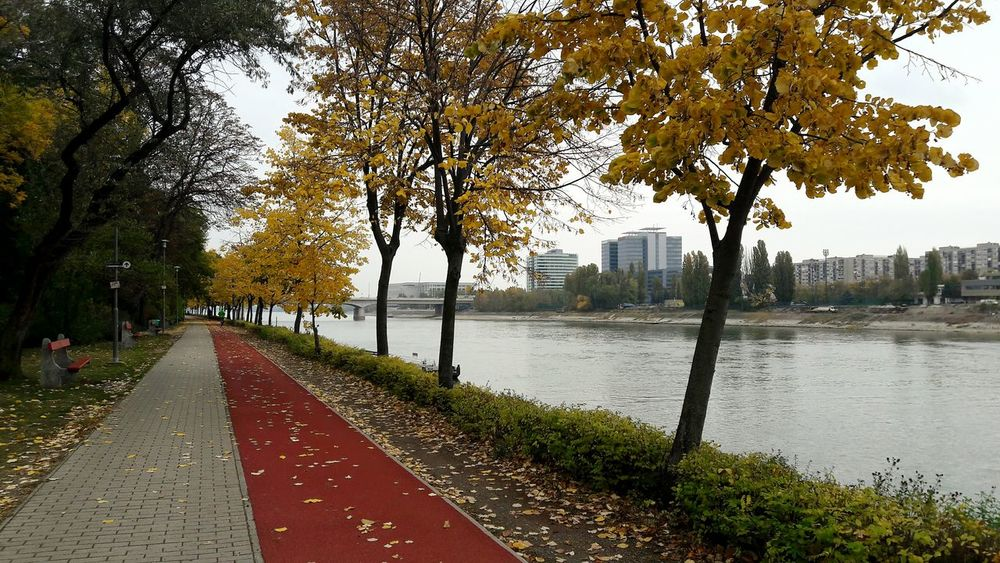 mid-autumn morning Budapest, Hungary Colours Outdoors Nature Water Autumn Autumn Collection Margaret Island Running running track