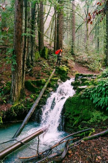 A rainy day hiking around the Redwood forest in California Tree Forest Water Plant Nature One Person Scenics - Nature Beauty In Nature Flowing Water WoodLand Stream - Flowing Water Outdoors Day Raining Umbrella Redwoods California