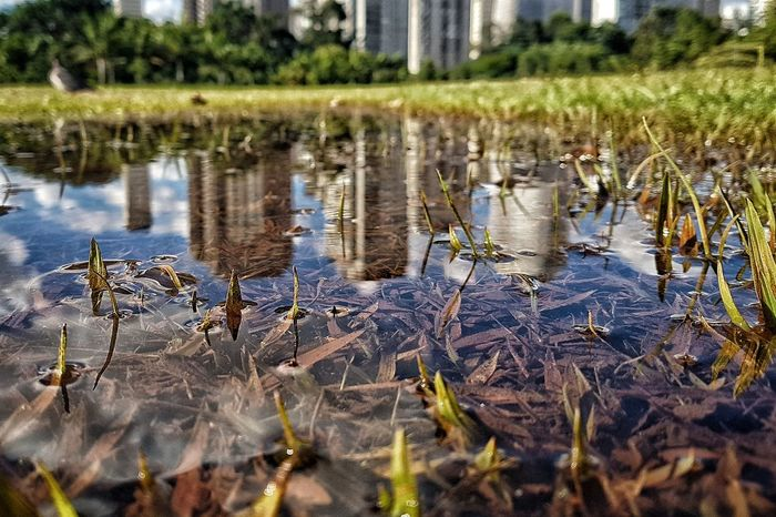 Building Building Exterior Office Building Skyline São Paulo Water Puddle Reflection Plant Close-up Grass Animal Themes Swamp Water Plant