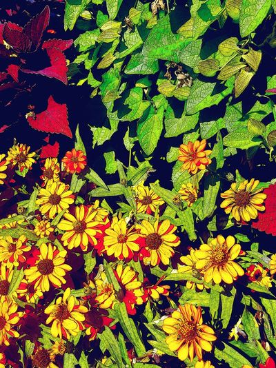 Flowers Flowers_collection Small Flowers Natural Beauty Nature Photography Nature_collection City Nature City Street City Life Street Photography Street Life Street Photo Summertime My City Nature_ Collection  Colorful Colour Of Live Close-up Green Leaves Yellow Red Green Macro Macro_collection Beautifully Organized Galaxy S7 Edge